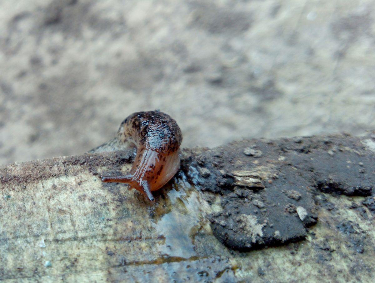 slug crawling in a wood