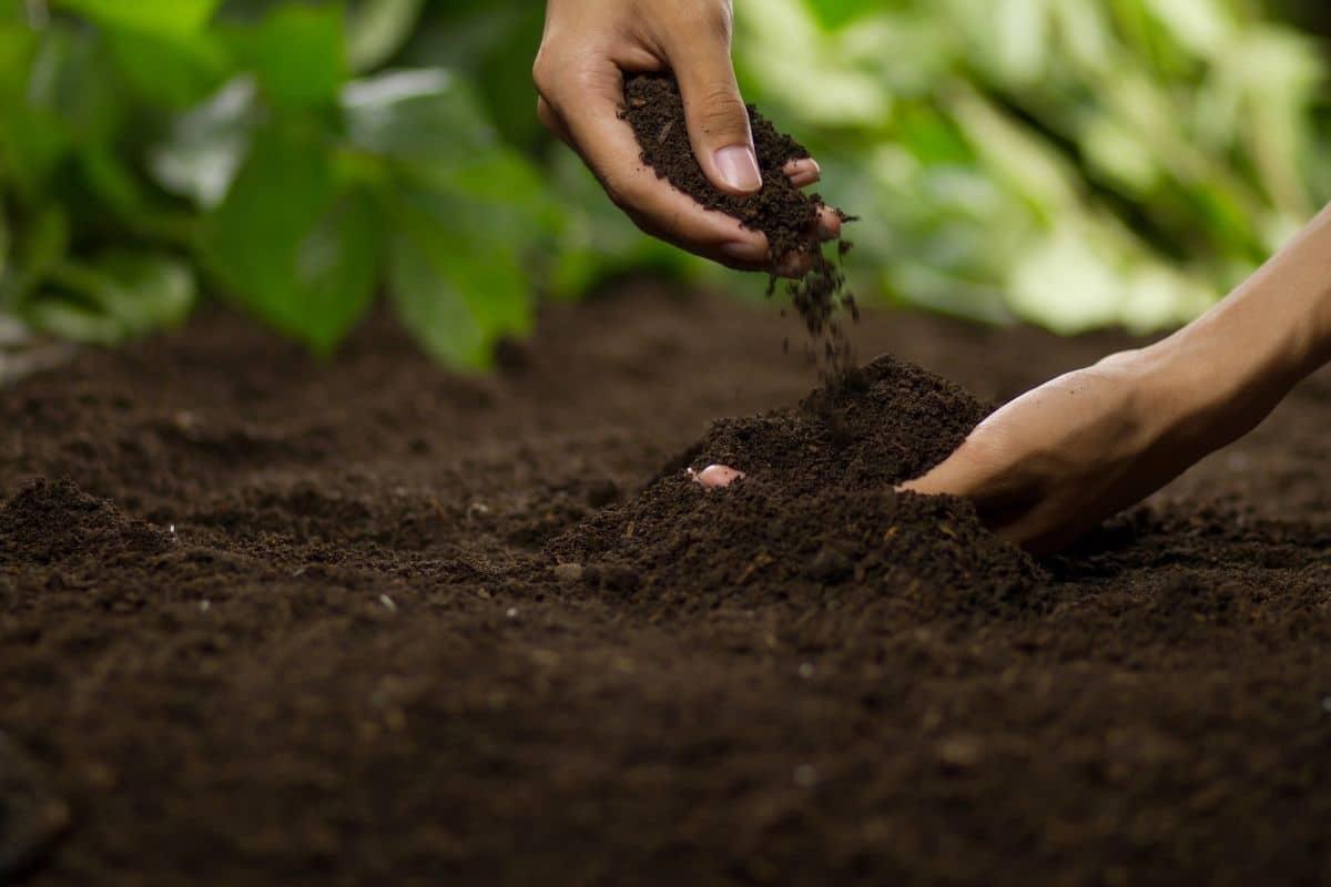 holding the soil in the garden
