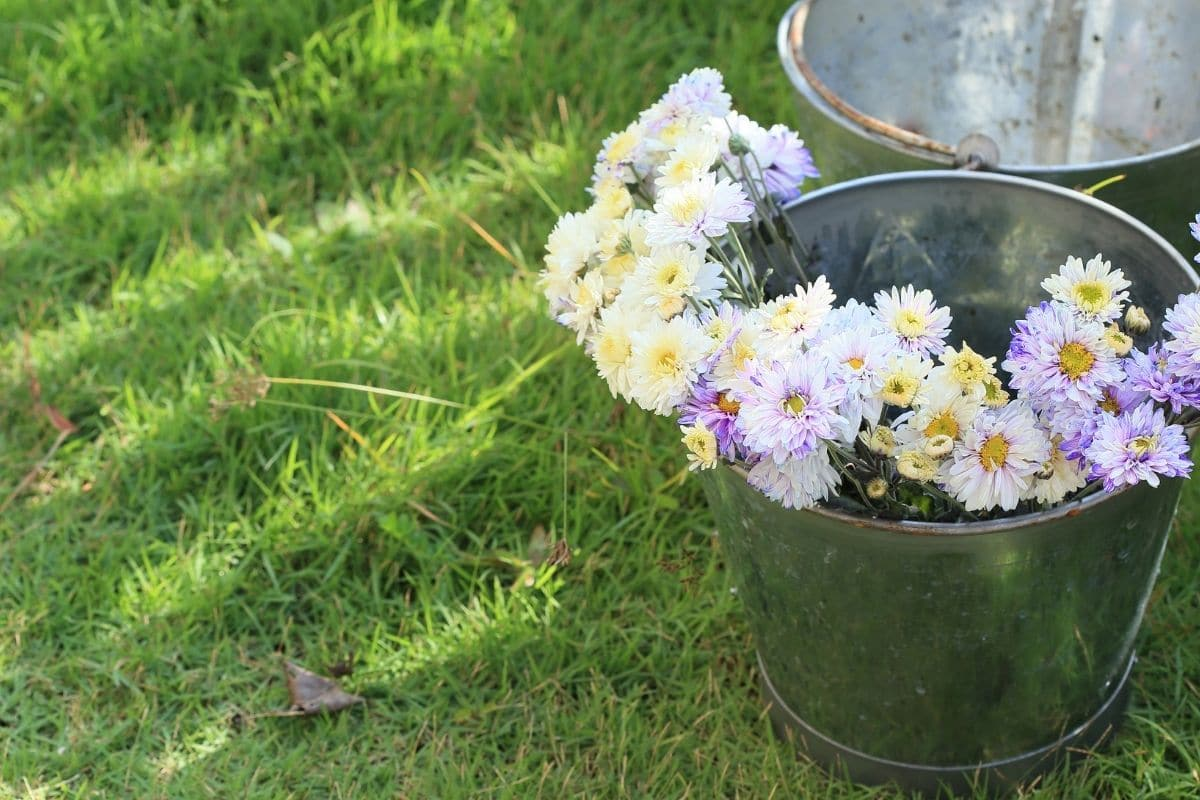 harvested flowers in a bucket