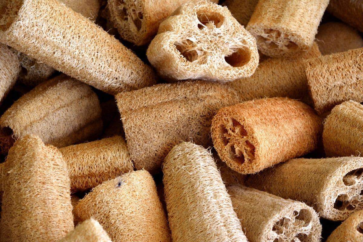 loofah sponges