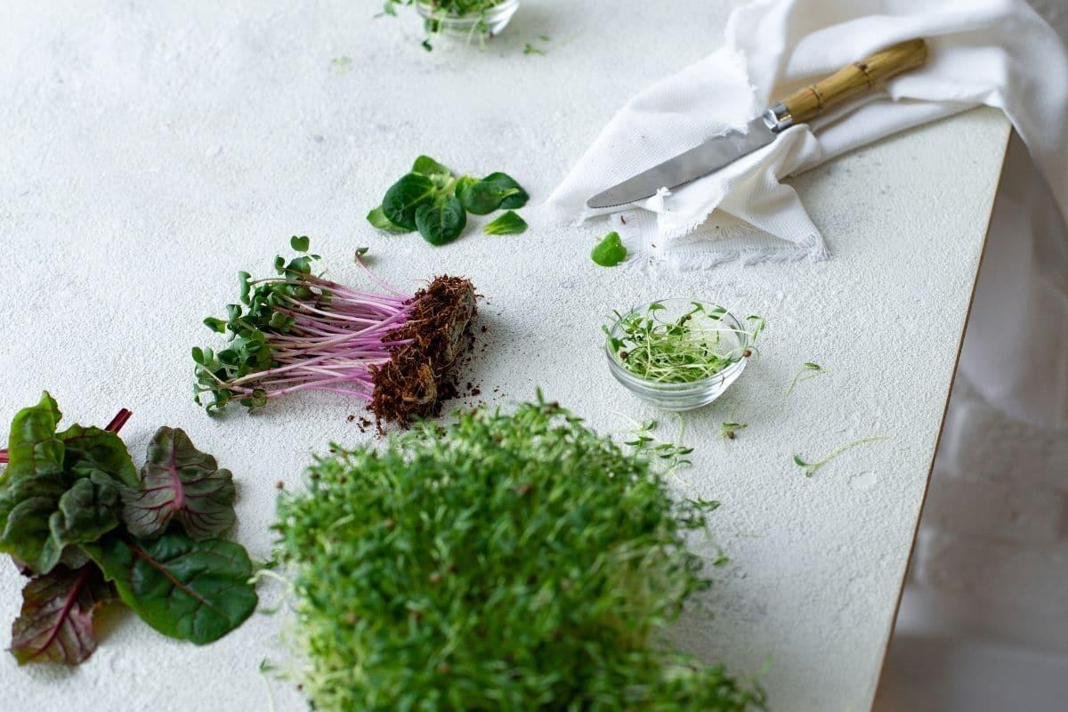 seedings in the table