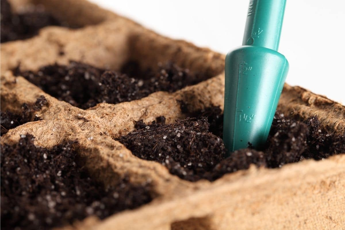 pressing soil to plant seeds