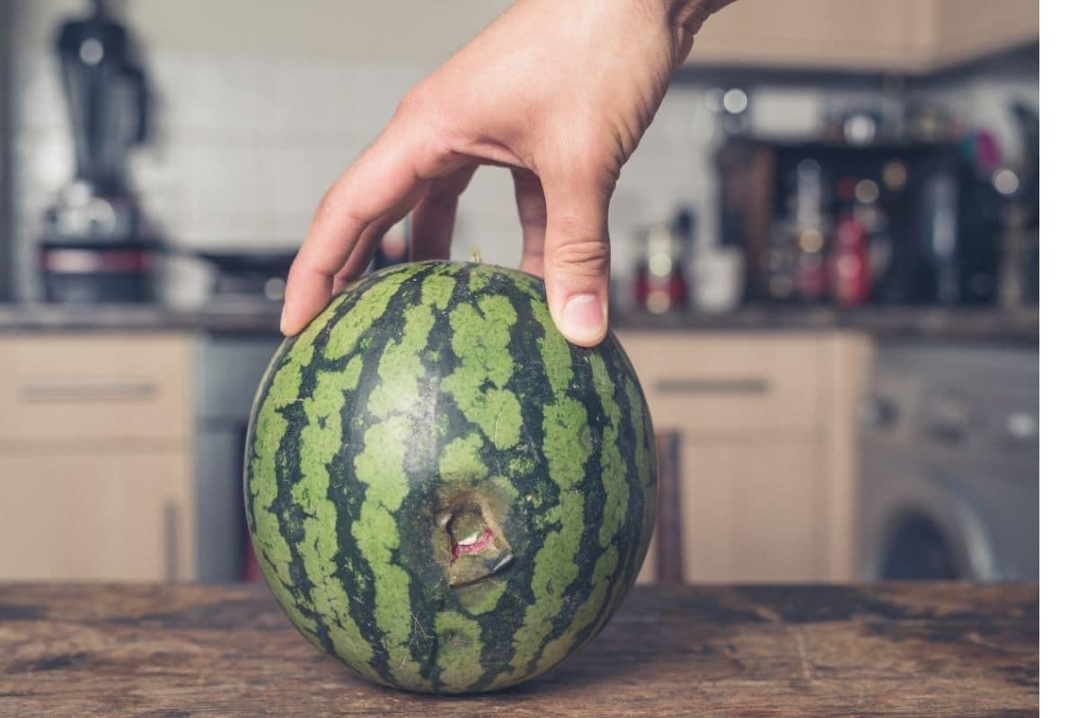 ruined watermelon
