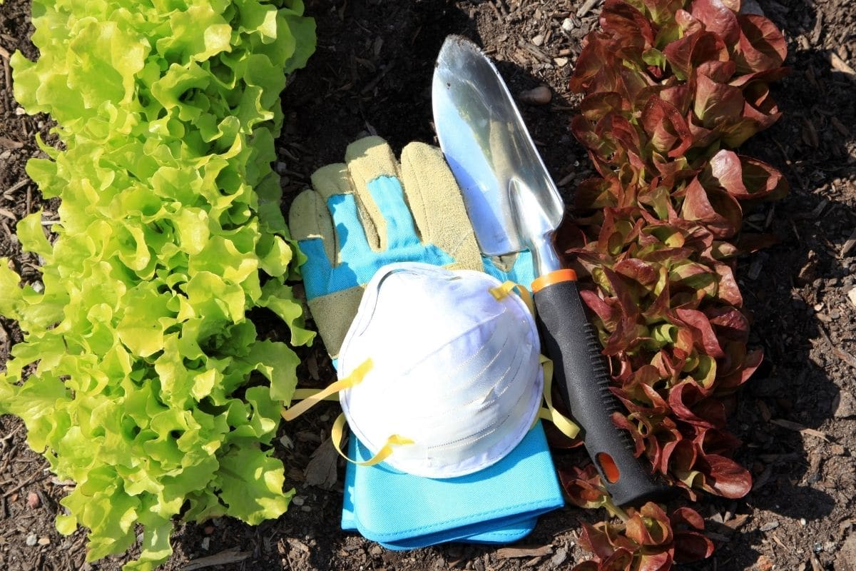 mask, gloves, and shovels in the garden