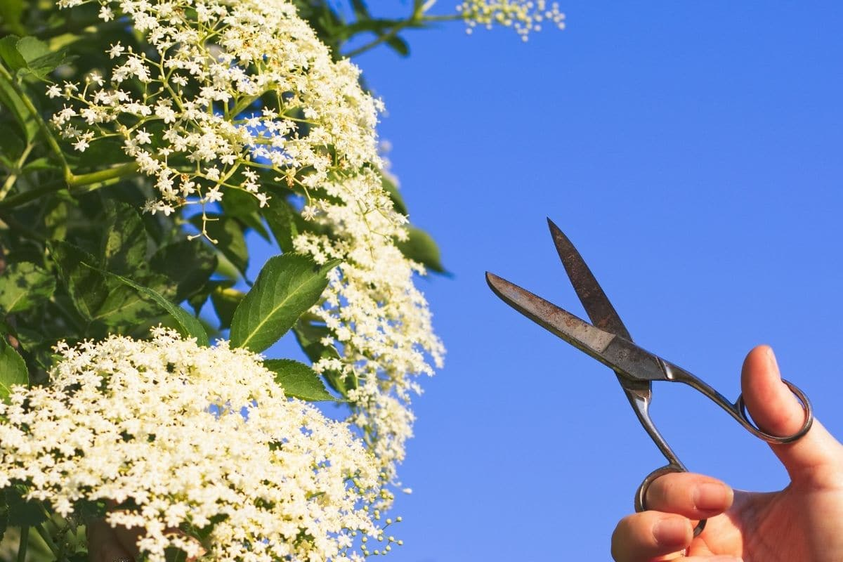 cutting flowers in a blue sky