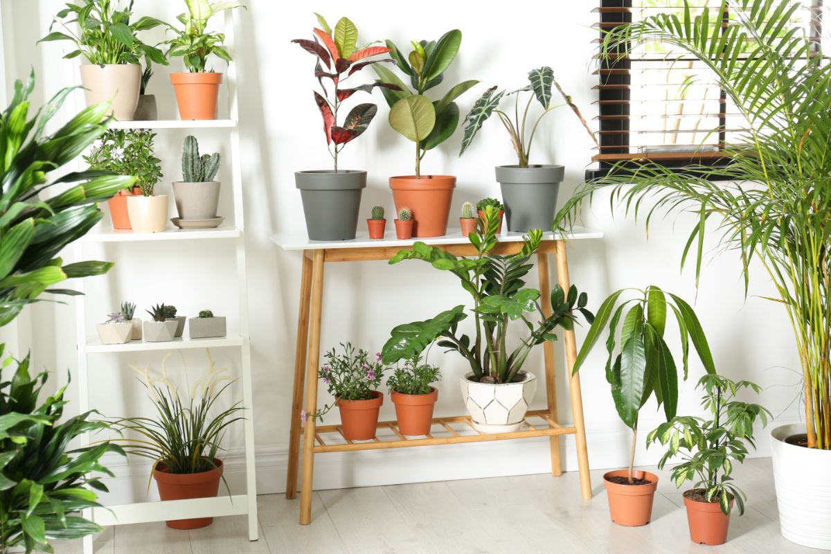 variety of plants in shelves