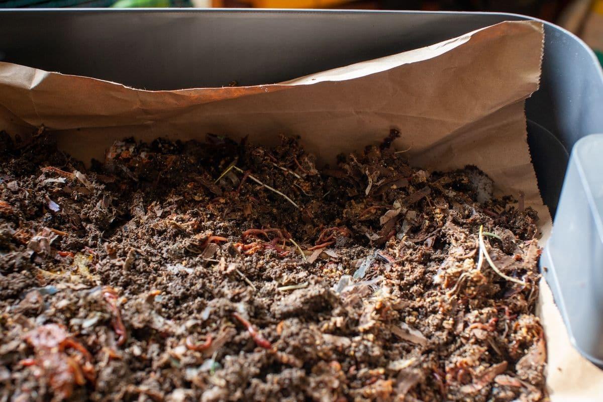 worm castings fertilizer