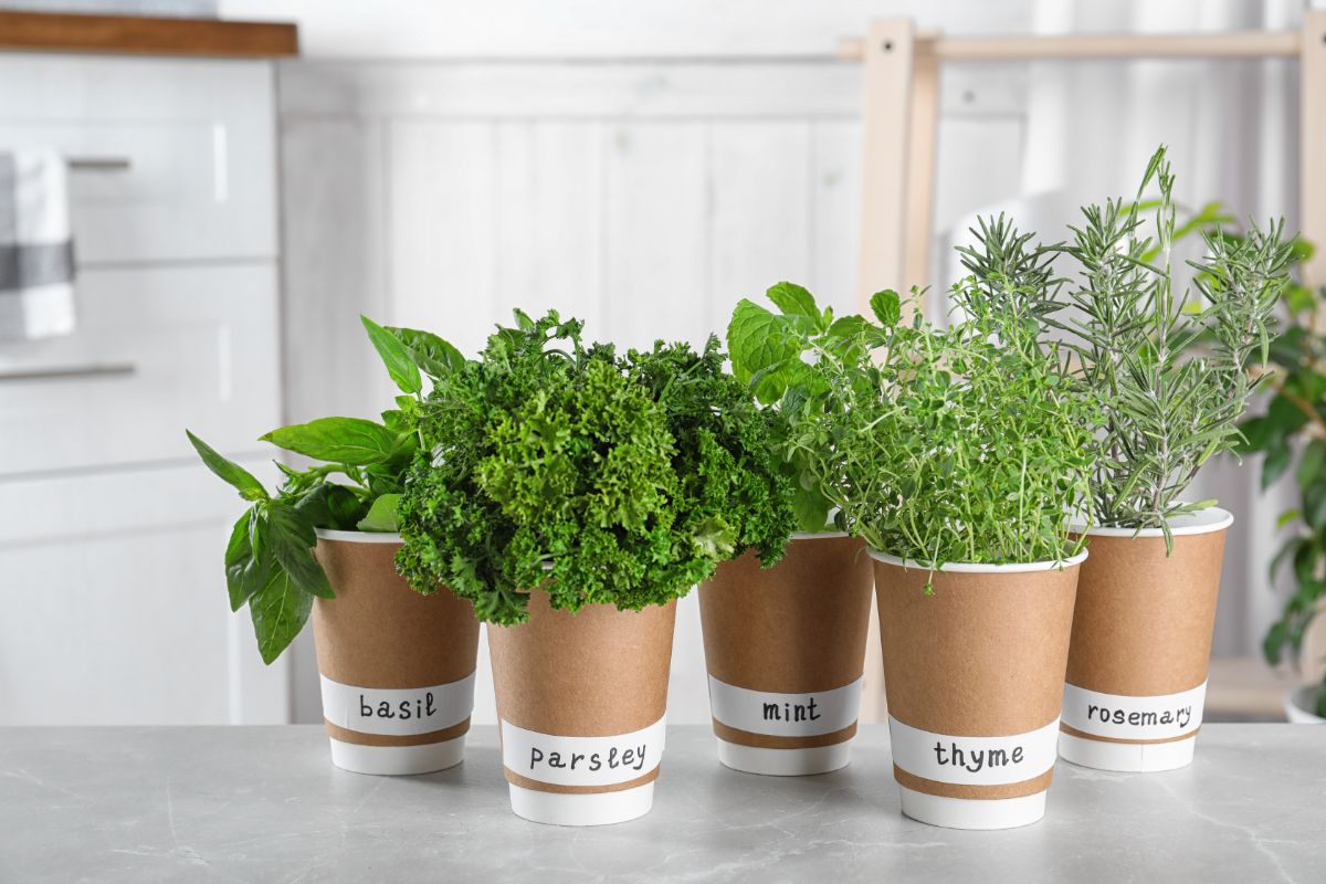 herbs in a pot with labels, basil, parsley, rosemary, thyme