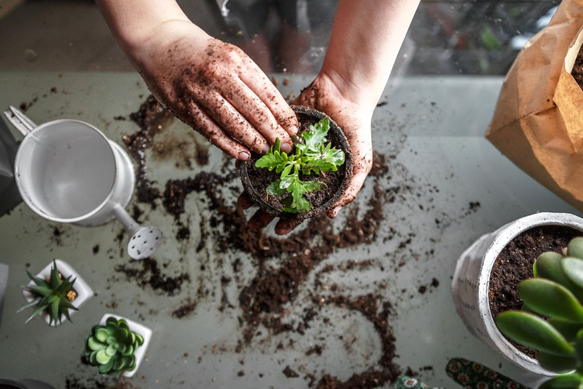 potting plants with both hands