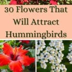 images of flowers that attract hummingbirds