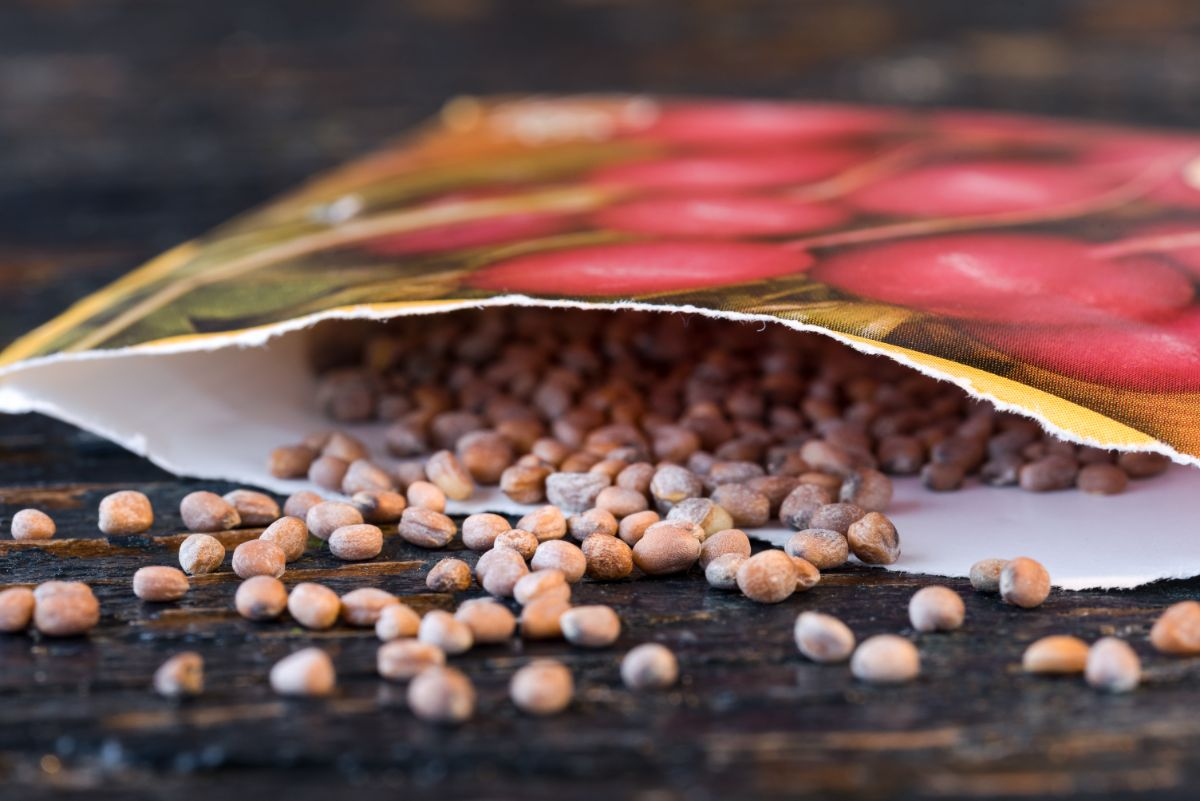 seeds in an open packet