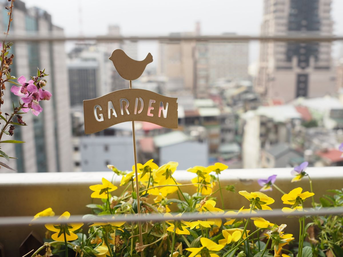 yellow flowers with garden label and city view