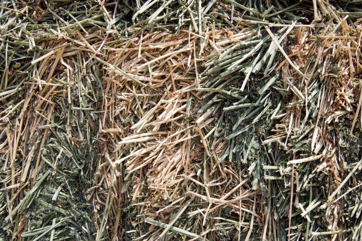alfafa meal fertilizer to soil