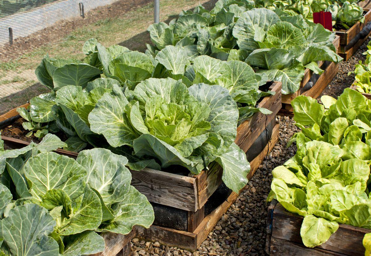 horizontal pallet garden with vegetable plants