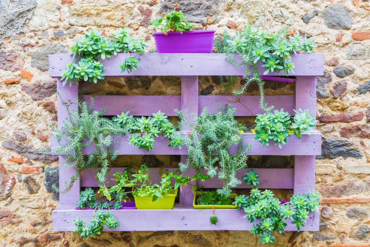 purple pallet in a wall filled with plants