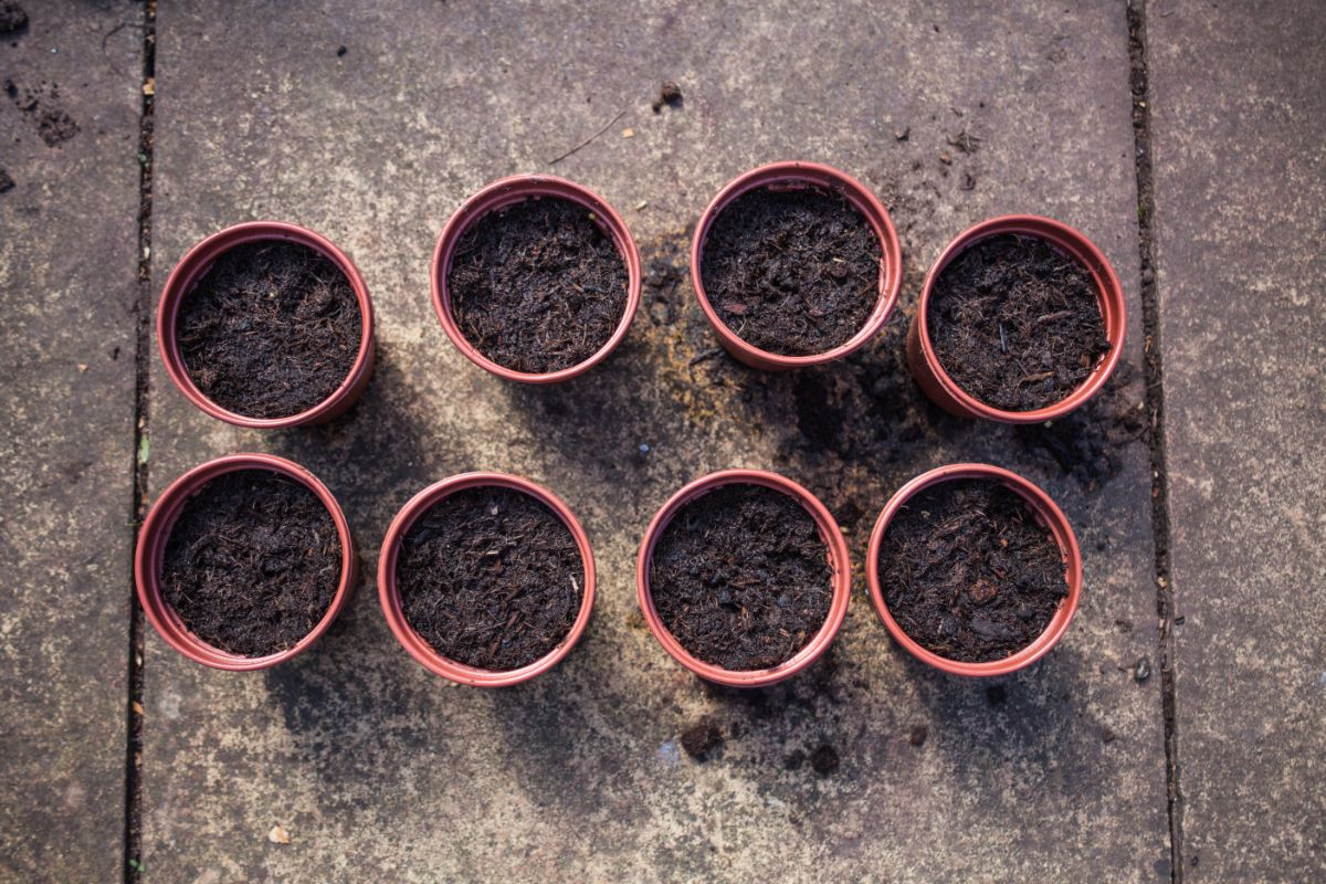 group of small pots with soil and seeds