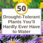 images of drought-tolerant plants
