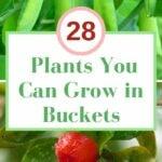 plants that grows in buckets