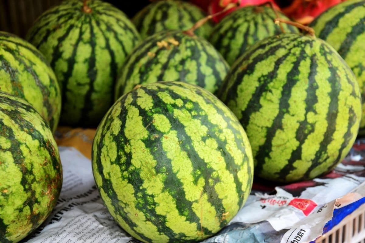 watermelon displayed in the market