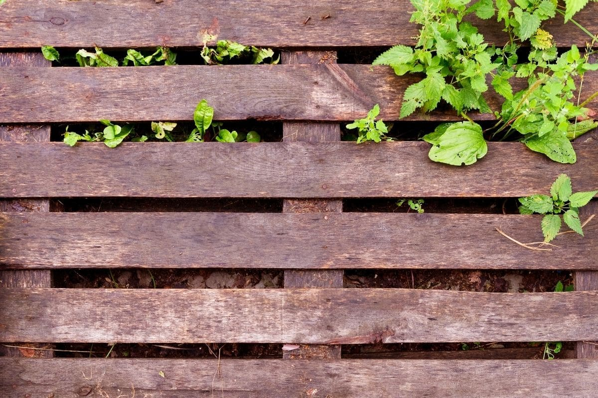 DIY pallet trellis for the plants in the garden