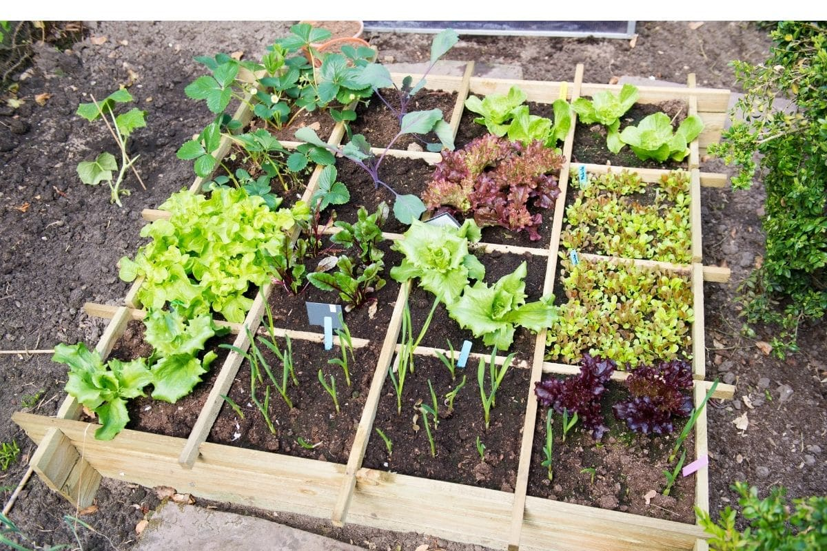 variety of healthy vegetable plant in a vegetable garden