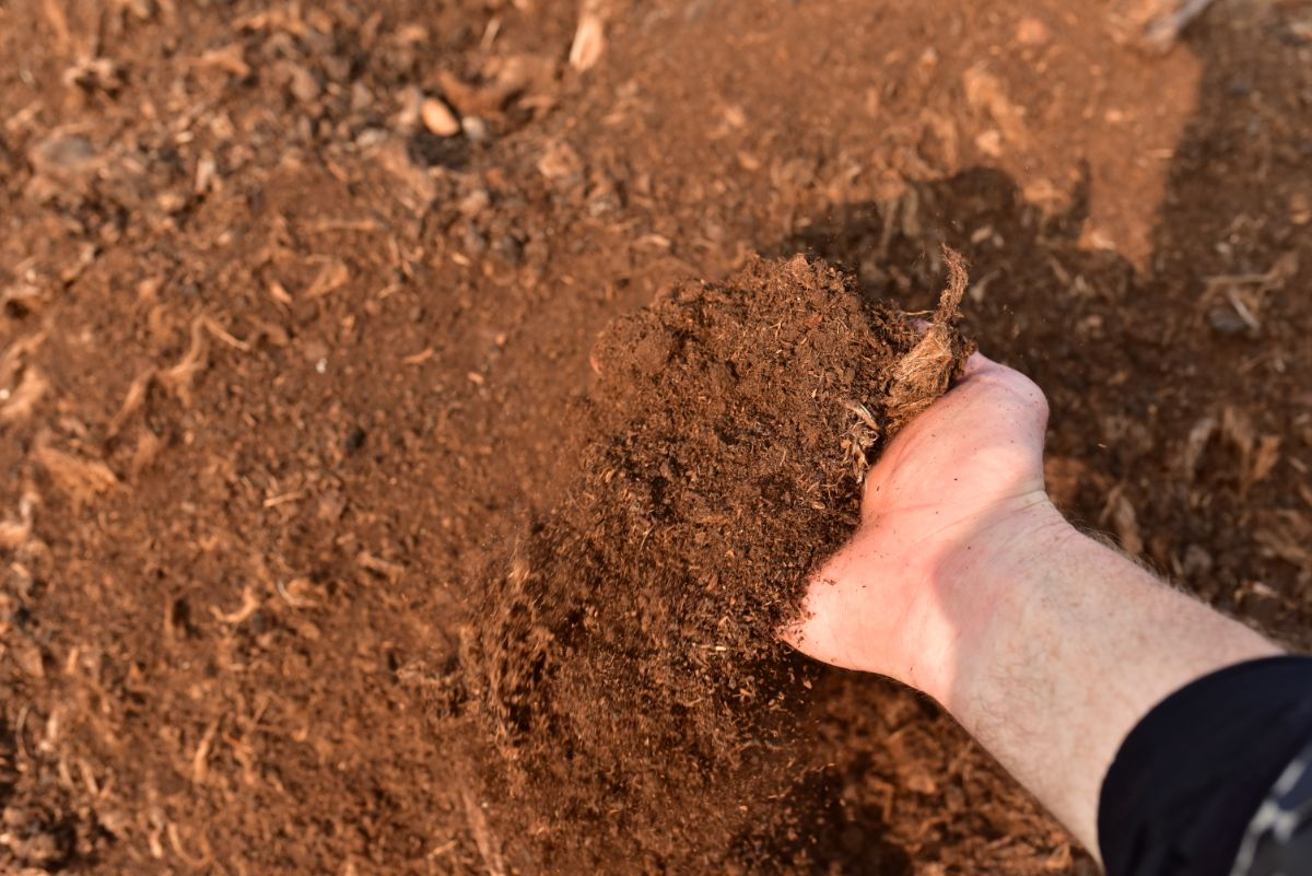 peat moss for the soil