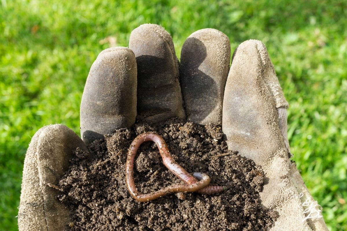 holding the soil with an earthworm