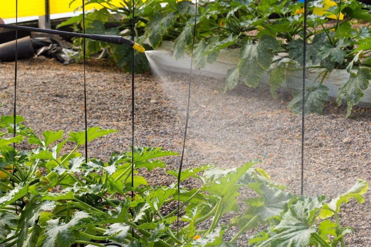 foliar spraying in the garden