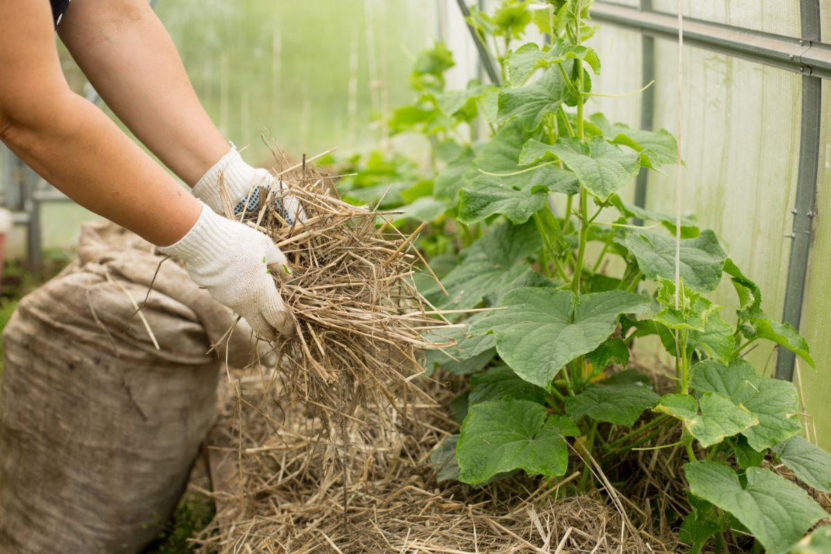 mulching garden soil