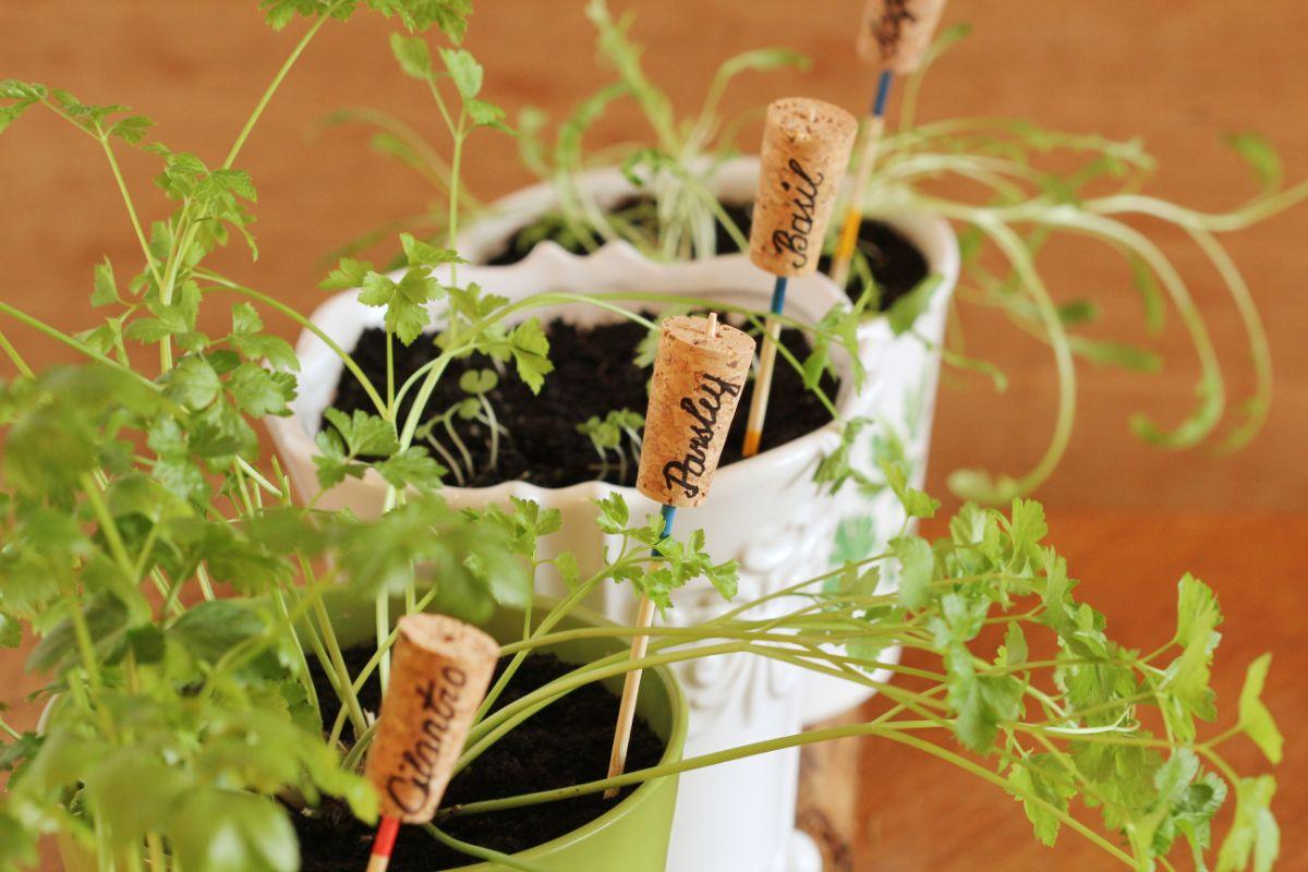 cork plant marker