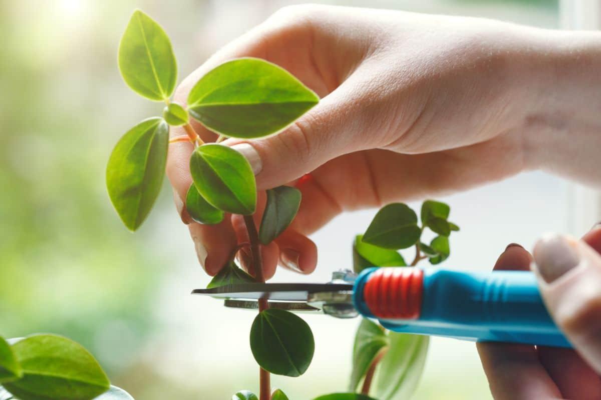 cutting plant stems