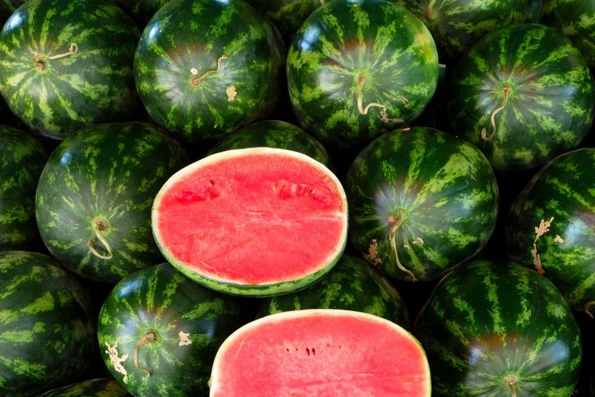 oval watermelon for sale in the market