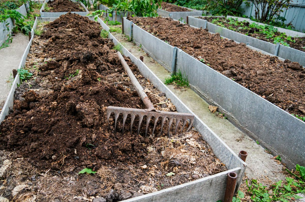 garden raised bed filled with manure