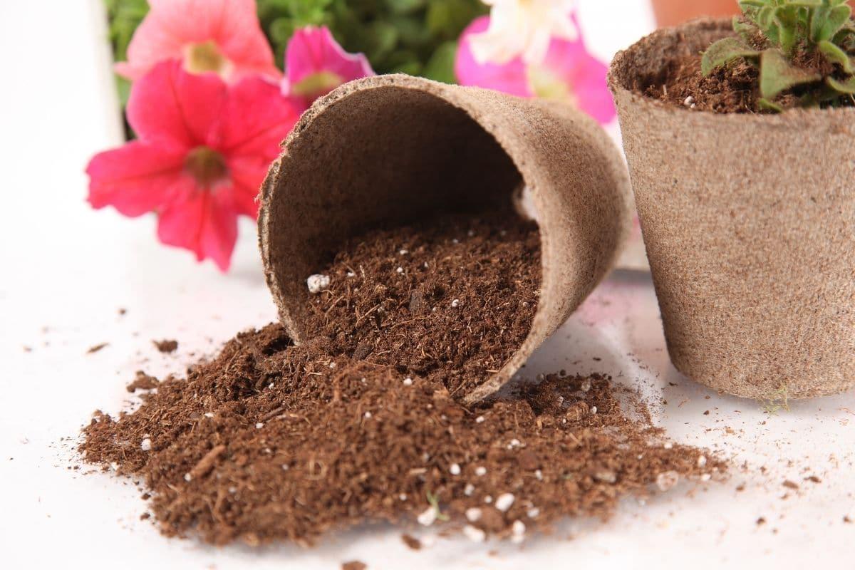 peat moss fertilizer in a pot