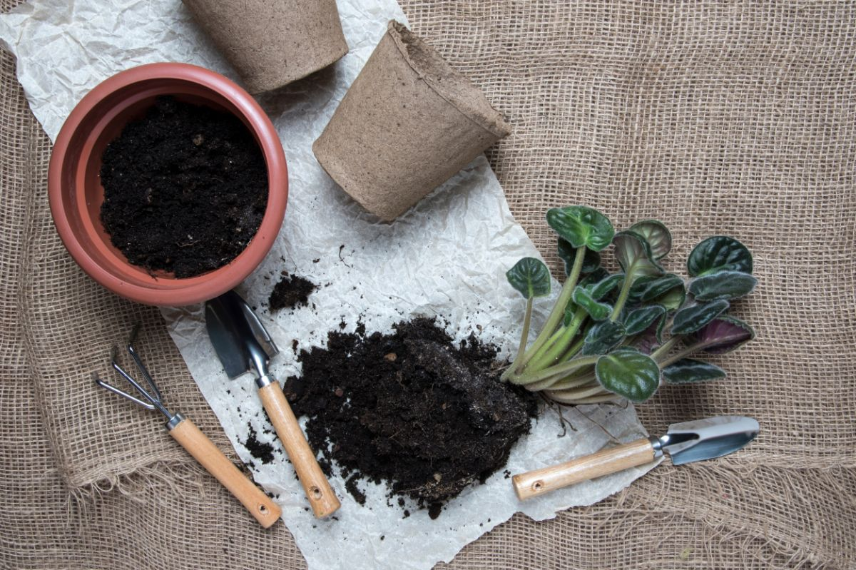burlap sheets with soil, seedlings,and pots