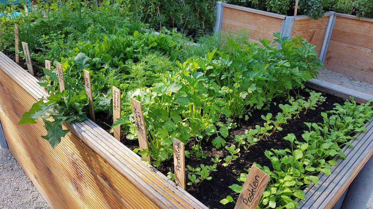 vegetable raised bed with mark or label