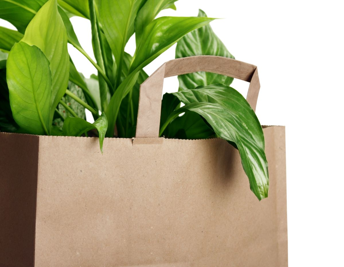 plant in a paper bag