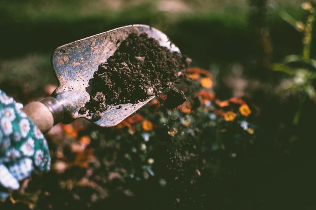 garden soil in a shovel
