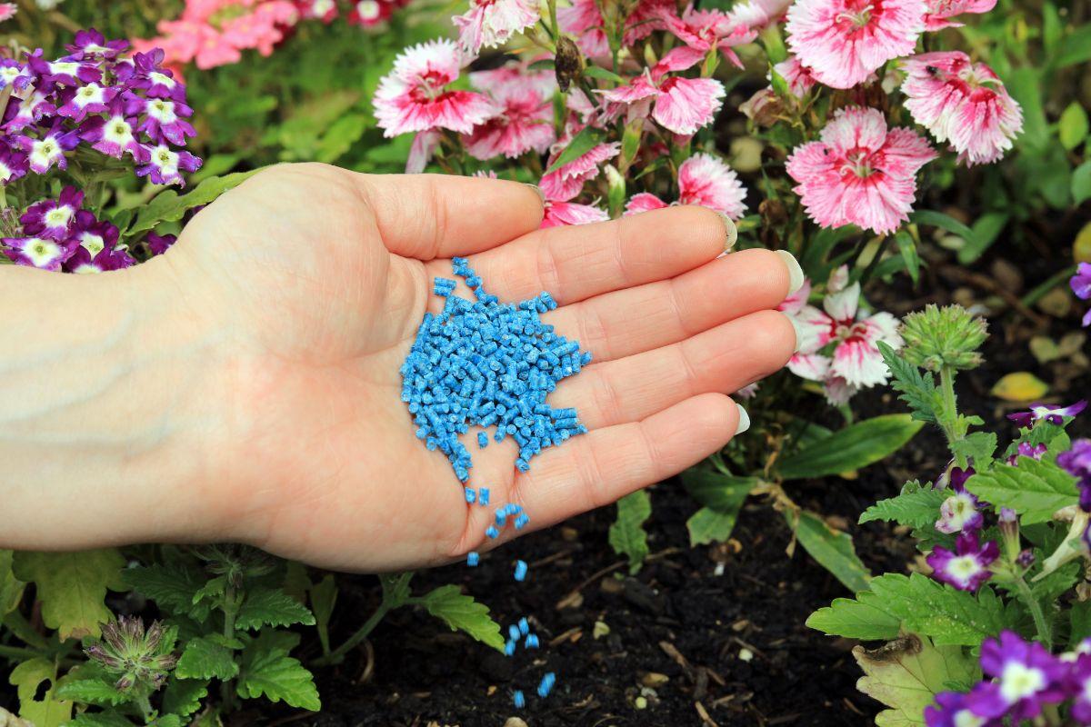 spreading slug pesticides in a flower garden