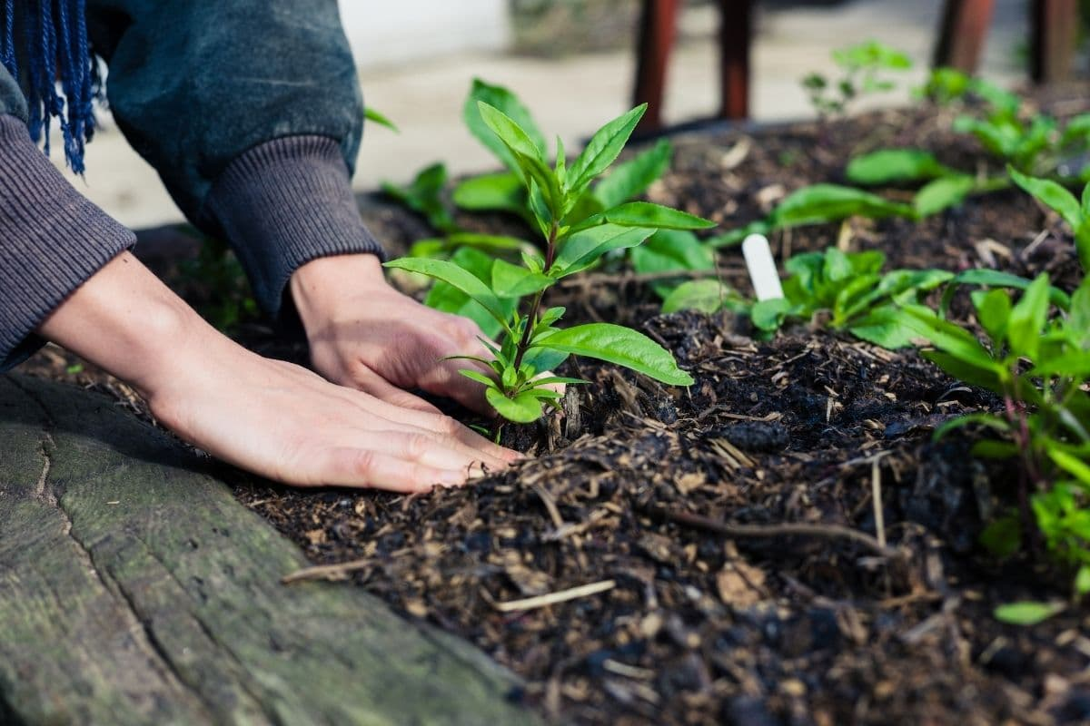planting outdoors