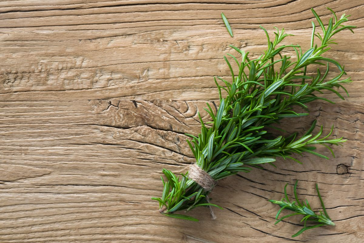 rosemary herb in a wooden table