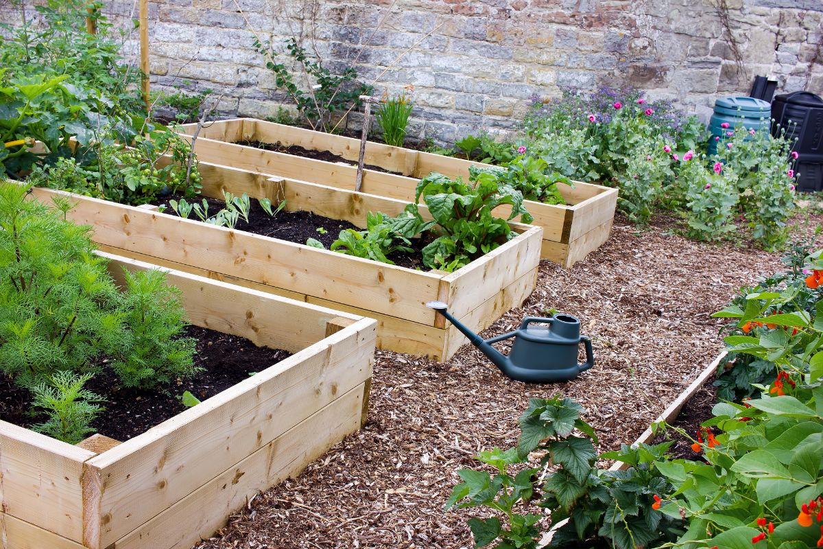 wooden raised beds with vegetable plants