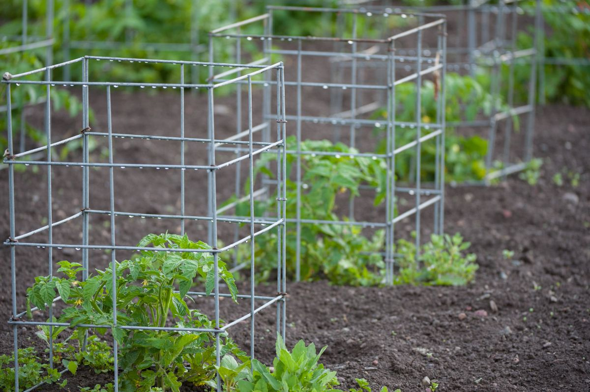 plant cage in the garden