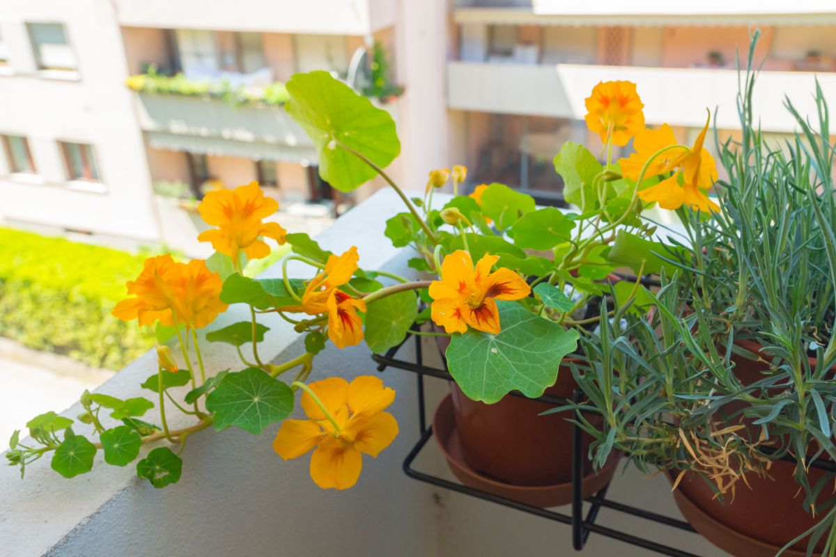 blooming flowers in the balcony or terrace