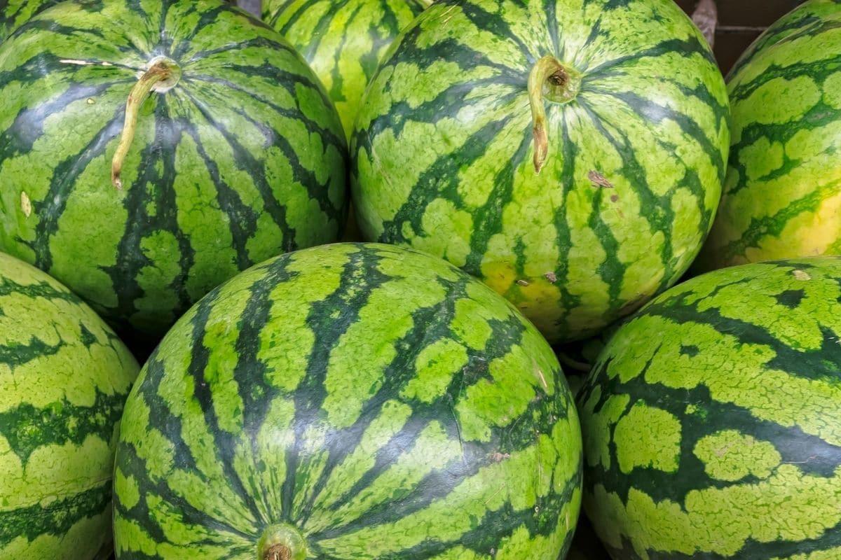 shiny watermelon