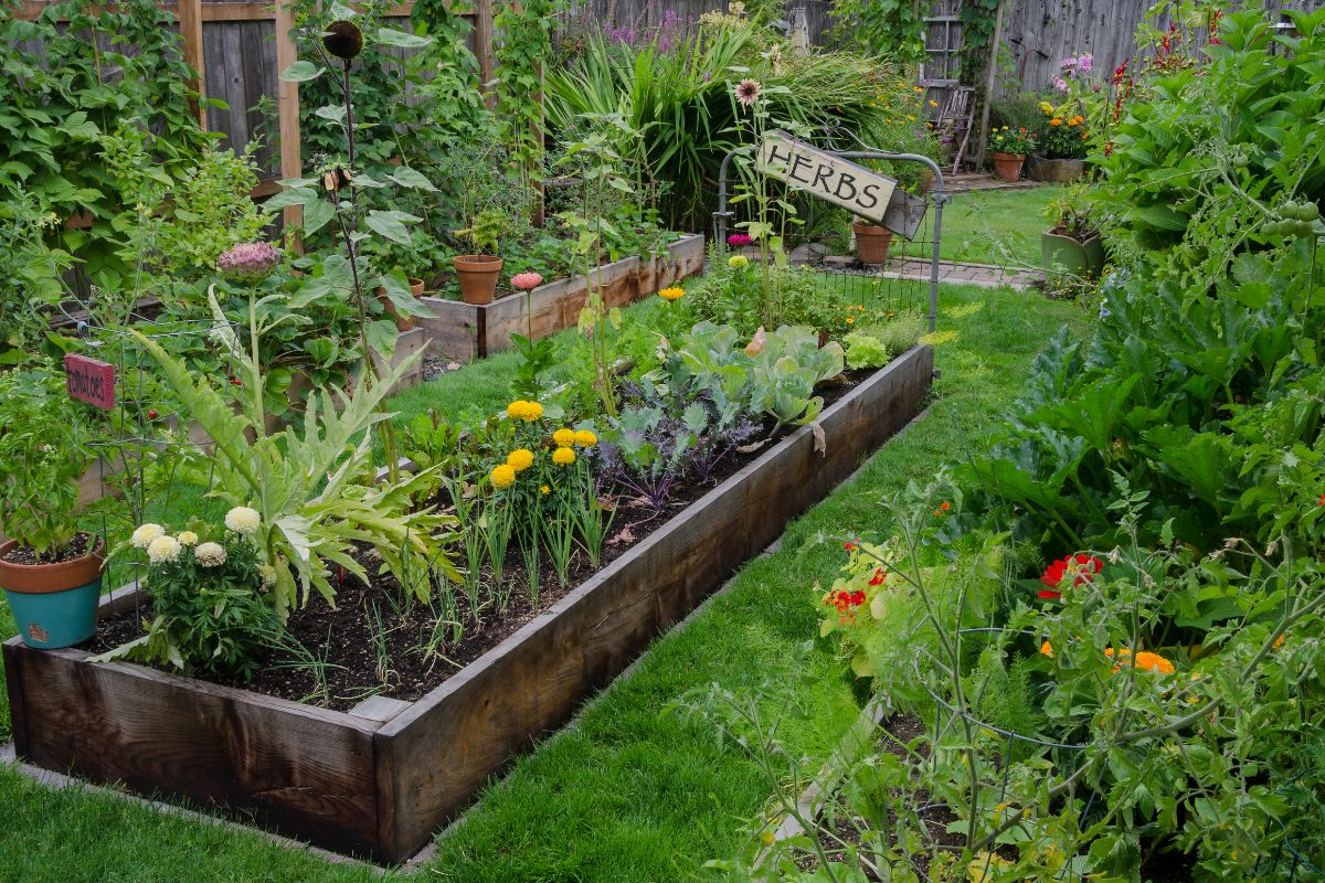 raised bed for vegetable, herbs, and flowers