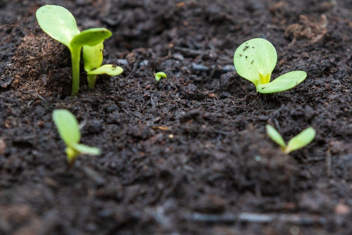 small plant sprouts in the garden