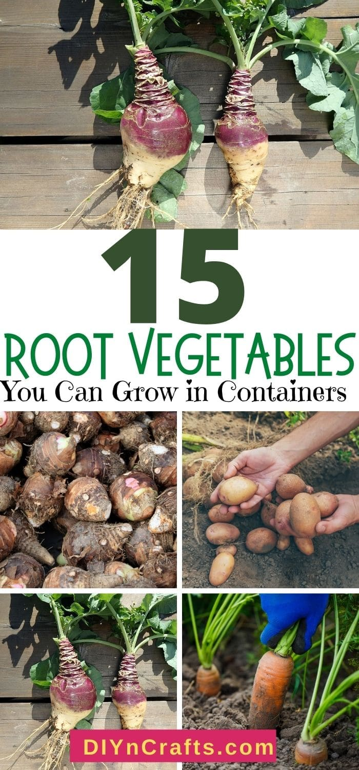 images of vegetable that can grown on containers