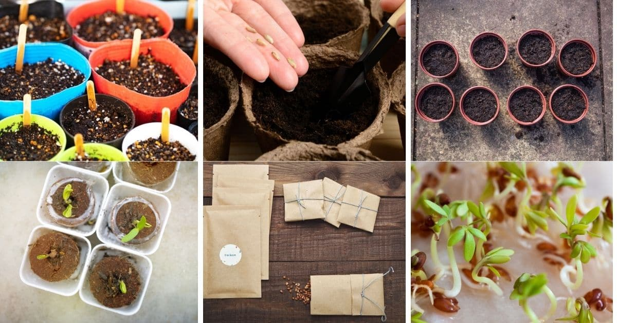 15 Reasons Why Your Seeds Didn't Germinate – and How to Fix It
