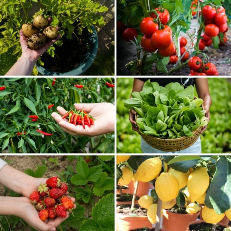 Plants You Can Grow in Buckets
